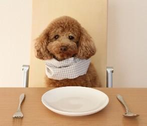 犬の食べ物!禁止なものは?果物編