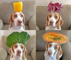 犬に絶対与えてはダメな野菜とは?