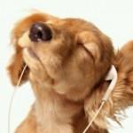 犬が喜ぶ方法!どんな音が好きなの?動画で紹介!