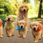 犬の散歩に行かないとダメな4つの理由とは?