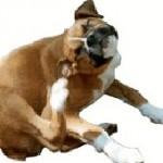 犬についたマダニの取り方!酢が有効ってホント?