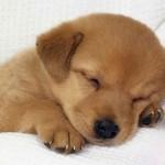 犬の下痢が治る安全な食べ物を一覧で紹介!