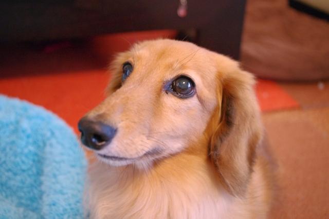 症候群 症状 クッシング 犬 末期