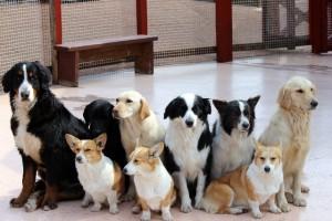 犬のトイレトレーニング!期間はどれくらい?