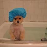 犬のお風呂はどれくらいの頻度がBEST?