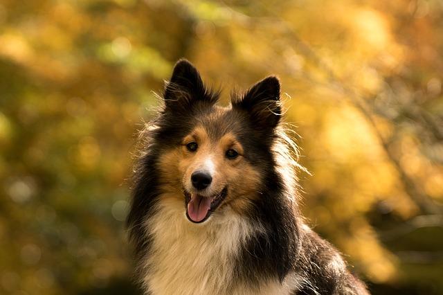 dog-1007598_640