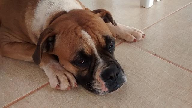 dog-427699_640