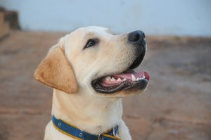 dog-434834_640