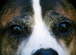dog-56978__180