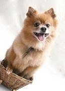 犬の避妊手術!術後の対応で気を付ける8つのこと!