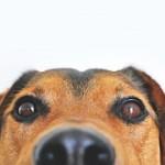 犬の避妊!メリットとデメリットは何がある?