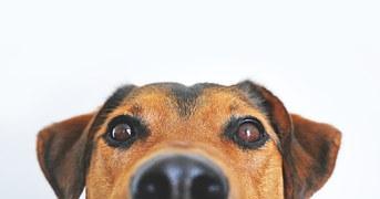 dog-838281__180