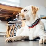 犬は去勢すると性格はどう変わる?術後の変化を紹介!