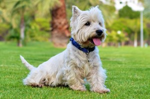 dogs-447067_640