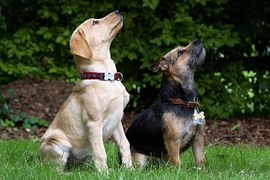 dogs-930727__180