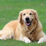 犬の足の震えは老化が原因?どう対処する?