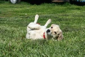 puppy-110193_640