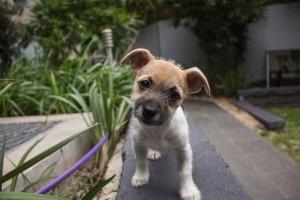 puppy-406163_640