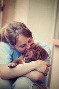 puppy-742616__180