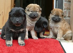 young-dogs-990745__180