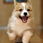 犬が床で滑らないようにする方法!タイルやマットが効果的?