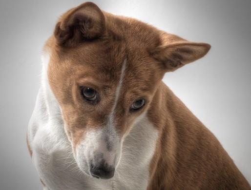 犬の痴呆にサプリが有効?症状や治療法もくわしく紹介!