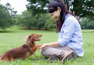 犬の年齢の見分け方!犬種によって違う?