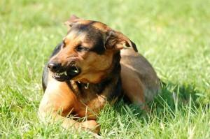 犬が威嚇!飼い主に吠えるときの対応はどうする?
