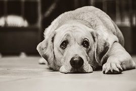 犬の脱毛症は病気の可能性も!対処法は?