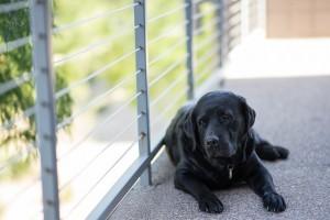 犬のヘルニア手術のリスクは?死亡や後遺症が残る可能性は?
