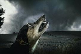 dog-183288__180