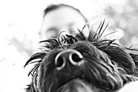 dog-196483__180