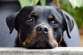 dog-218965__180