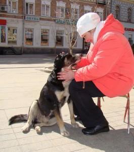 dog-231267_640