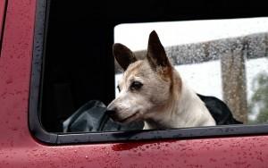 dog-425059_640