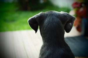 dog-428012_640