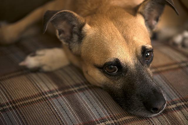 dog-460583_640