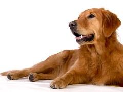 dog-620152__180