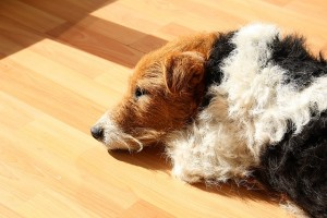 dog-668120_640