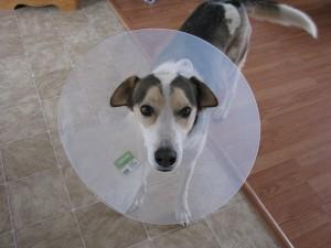 dog-669528_640