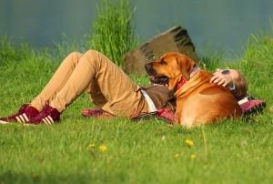 オス犬の発情期の時期はいつ?飼い主ができる対策とは?