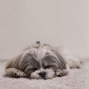 dog-871773_640