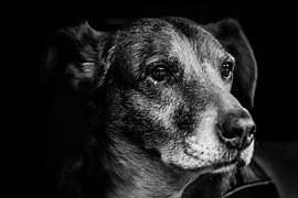 dog-903213__180