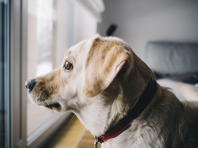 dog-926220_640