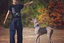 dog-987941__180