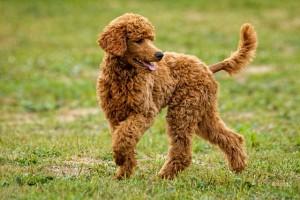 dog-playing-958212_640