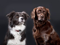 dogs-1192023__180