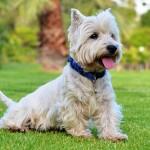 犬がびっこをひいている!仮病の場合はどうすればいい?