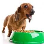 犬の餌の量はどのくらいが良いの?計算の仕方を紹介!
