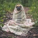 犬が熱をともなう風邪をひいた!症状別に対処法を紹介